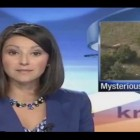 UFO Crop Circles 2013 – Large Elk Die Off next to Crop Circle! – NEWS REPORT