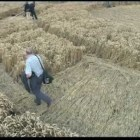 Crop Circles – A Silent Knowing