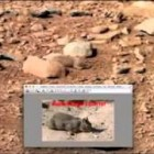 Rat On Mars, Actual NASA Archive Photos, UFO Sightings Daily News.