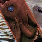 Teaching Ancient Nautilus New Tricks
