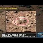Mars Rover Curiosity Photos Show Rat, Face, Shoe & More