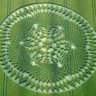 ufo latest finding crop circles and dna