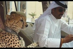 National Geographic Documentary 2015 – Lifestyle of Dubai`s Richfull documentary HD