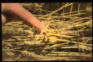 [UFOs File] Alien signs Crop Circles NEW Aliens Documentary 2014