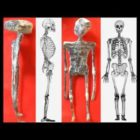 CONFIRMED! Alien mummified found in Peru, X Ray, News report -Extaterrestre Perú, Rayos X