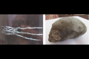 ALIEN HAND AND SKULL FOUND IN PERU